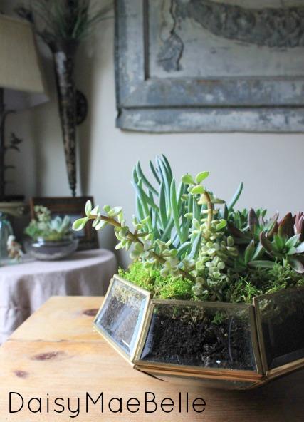 Easy DIY Terrarium @ DaisyMaeBelle