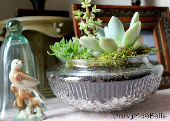 Terrarium Using Vintage Light Covers @ DaisyMaeBelle