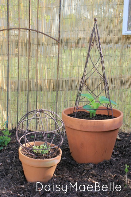 Planted Hosta @ DaisyMaeBelle