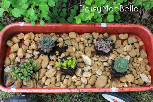 How to Make a Succulent Garden in a Wagon @ DaisyMaeBelle