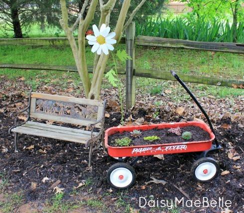 DIY Succulent Garden @ DaisyMaeBelle