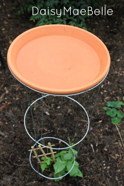 DIY Tomato Cage Bird Bath @ DaisyMaeBelle