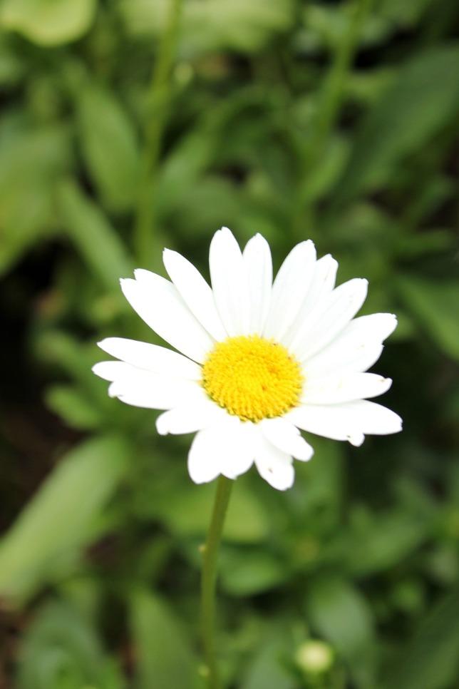 Best Cut Flowers