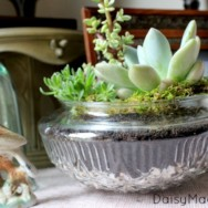 DIY Vintage Light Cover Terrariums